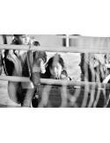 La puerta cerrada (Crisis humanitaria, 26 voces contra la indiferencia)